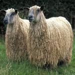 Из овечьей шерсти