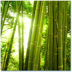 Одеяла (бамбук...)